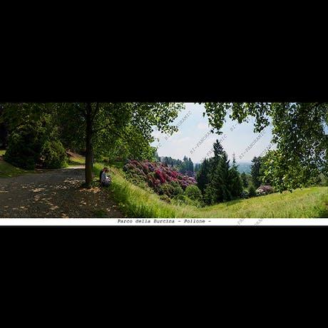 Parco della Burcina - Pollone -  cm.24 x 9
